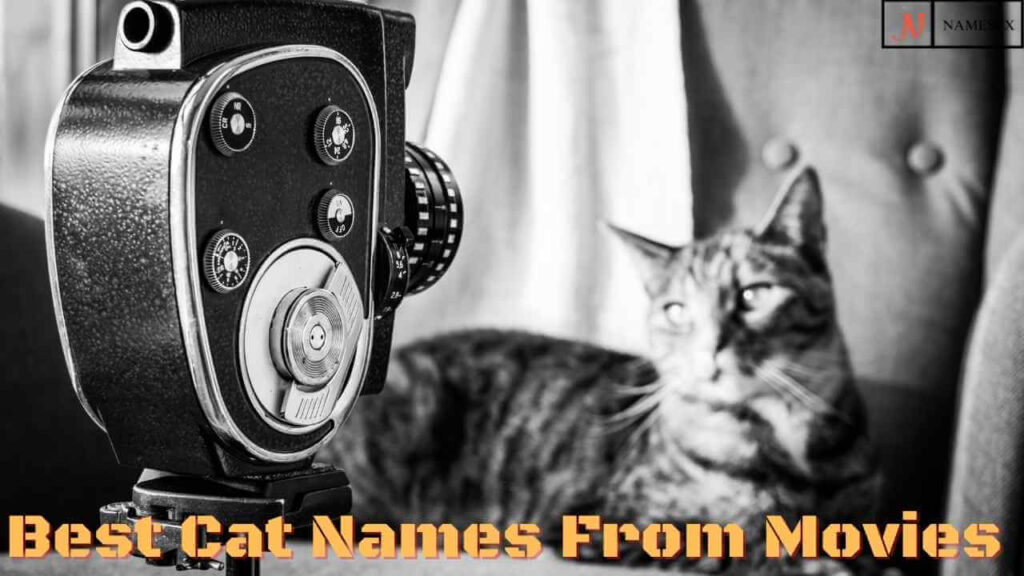 Best Cat Names From Movies,