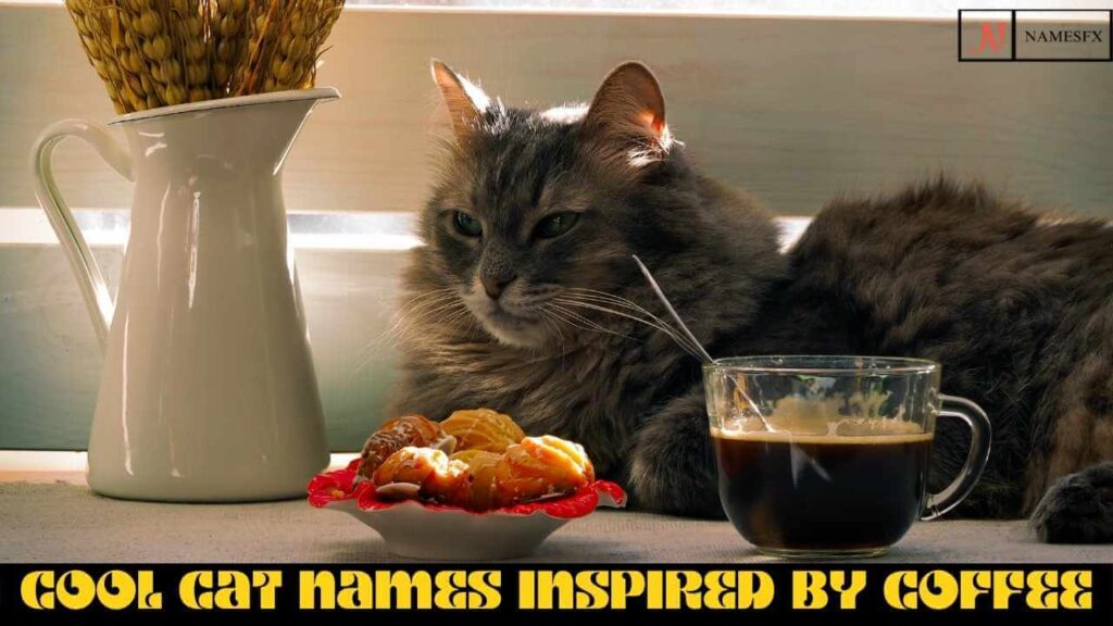 Cool Cat Names Inspired By Coffee,