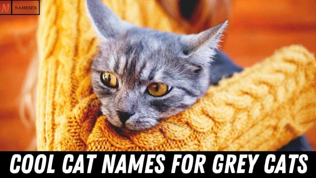 Cool Cat Names For Grey cats,