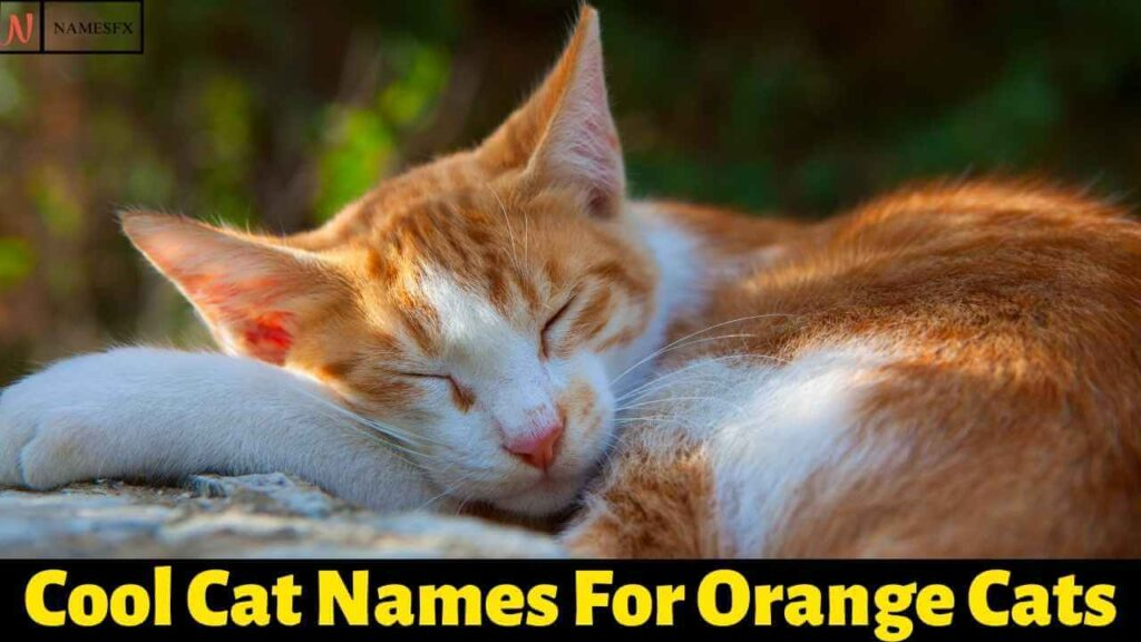 Cool Cat Names For Orange Cats,
