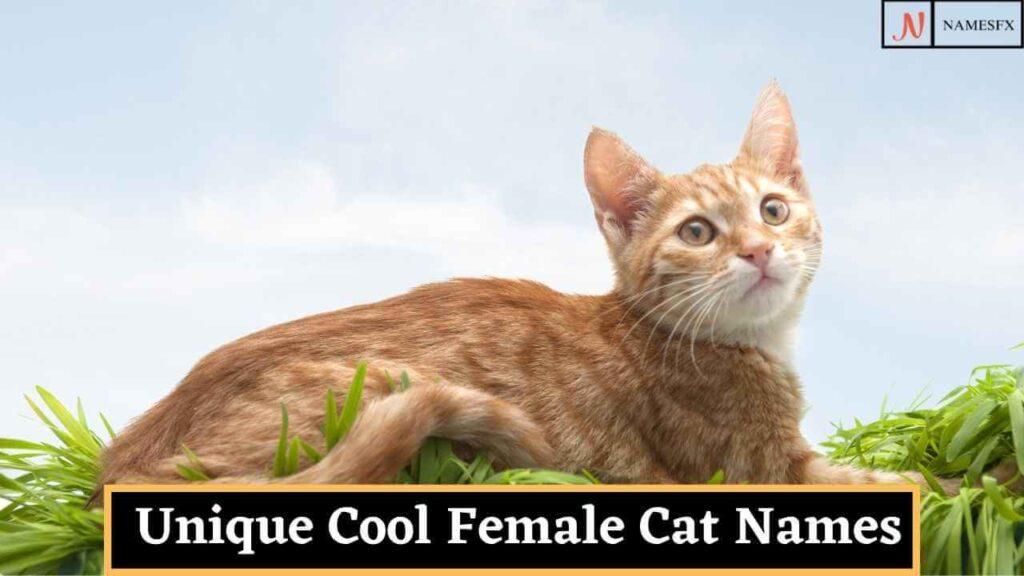 Cool Girl Cat Names,