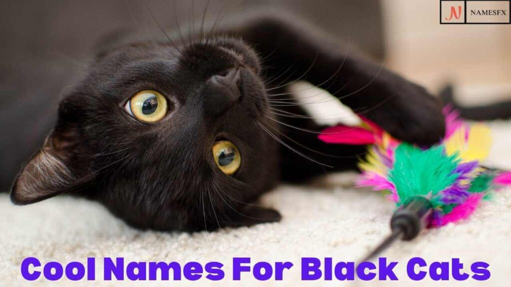 Cool Cat Names For Black Cats,