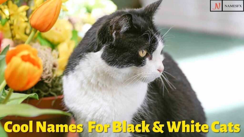 Cool Cat Names For Black & White Cats,