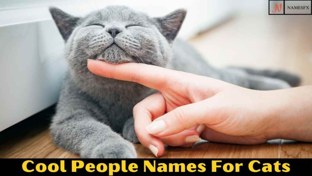 Cool People Names For Cats,
