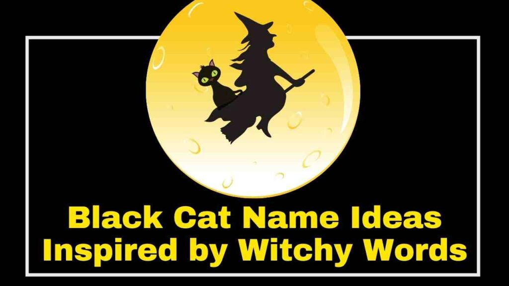 Black Cat Name Ideas Inspired by Witchy Words