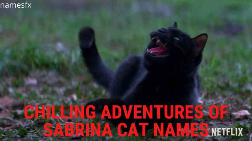 Chilling Adventures of Sabrina Cat Names