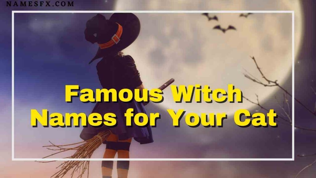 Famous Witch Names for Your Cat