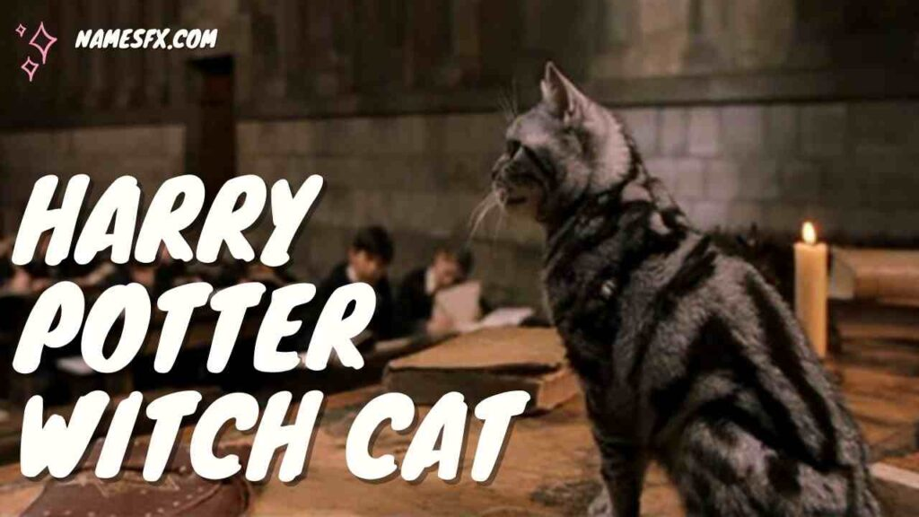 Harry Potter Witch Cat