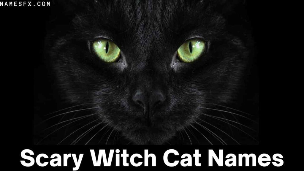 Scary Witch Cat Names,