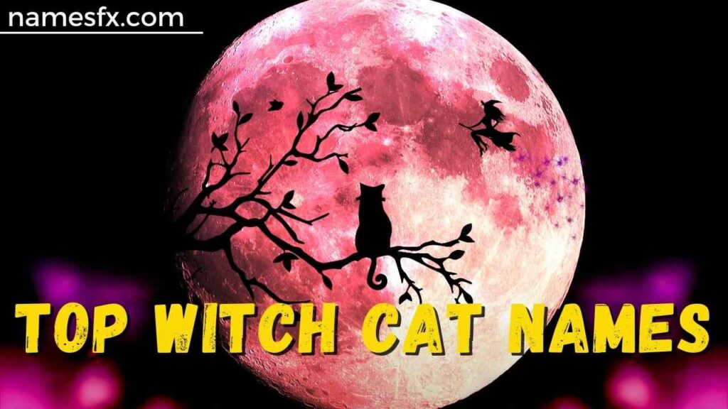 Top Witch Cat Names