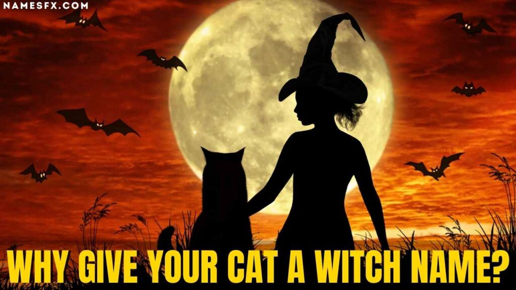 Why Give Your Cat a Witch Name