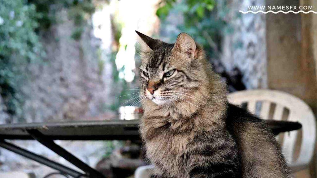 tabby cat boy