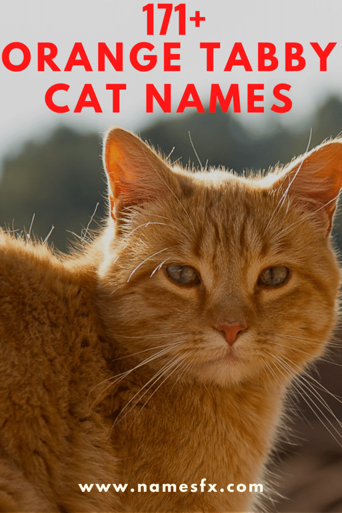 Orange Tabby Cat Names with Meaning